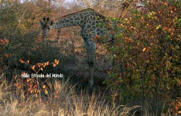 Itinerario 2 settimane in Sudafrica