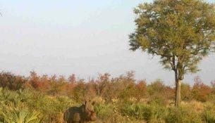 Rinoceronte africa