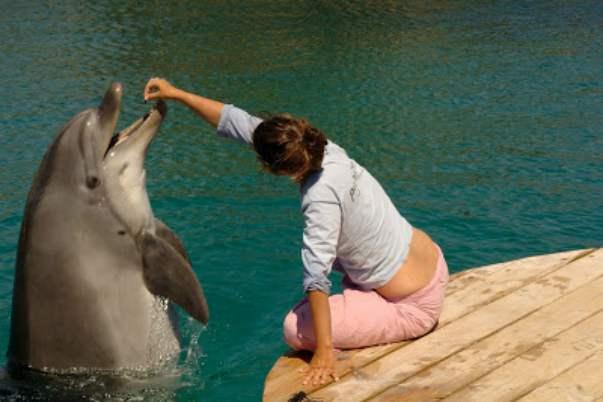 Eilat delfini
