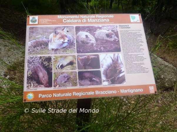 Quali animali vivono alla caldara di Manziana
