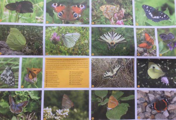 farfalle oltrepo