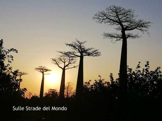 Come organizzare un viaggio in Madagascar