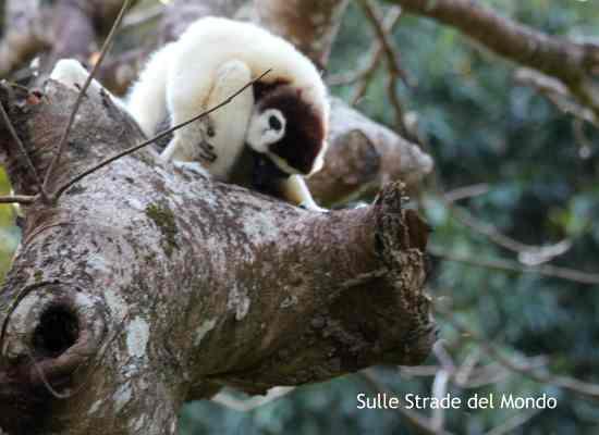 Lemure riserva di Nahampoana