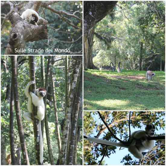 alcuni dei lemuri della riserva di Nahampoana