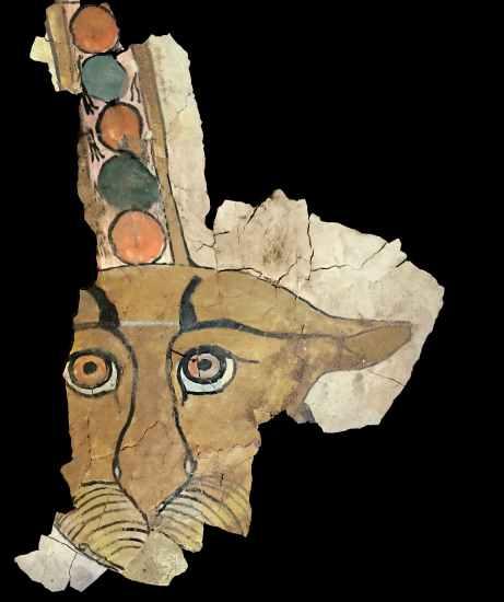 Il puma scoperto nelle tombe egizie di Assuan