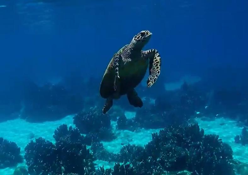 snorkeling a nosy be