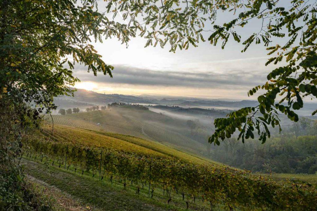Panorama Vino Langhe monferrato