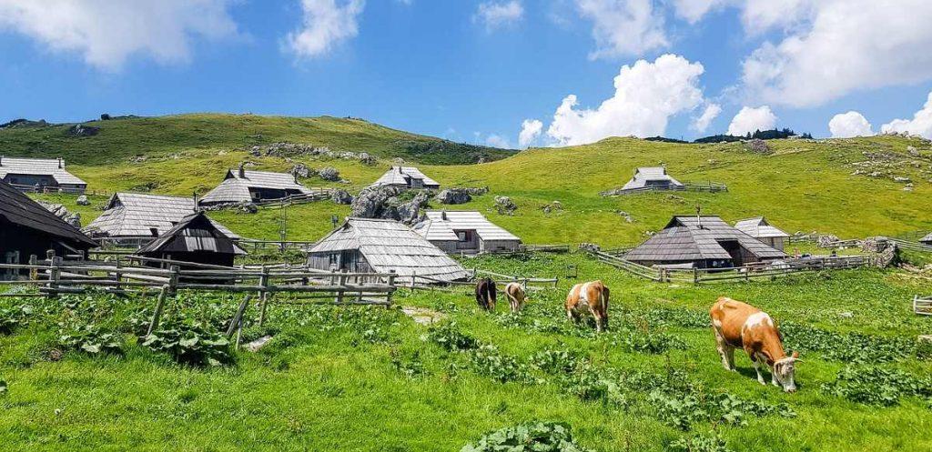 Alpeggi sloveni